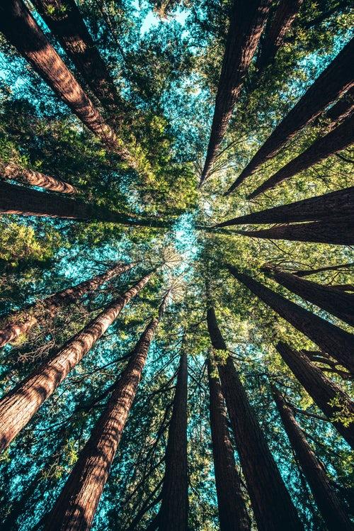 Kategorije motornih žag za gozdarska opravila